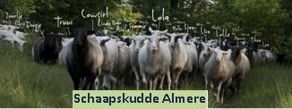 Schaapskudde Almere